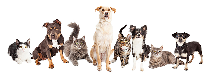 our specialty is cats and dogs!