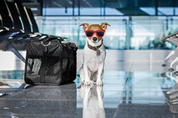 Animal Travel Health Certificates